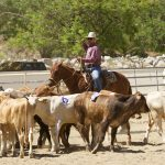 7th Annual Early Californios Skills of the Rancho