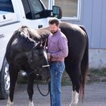 Stomach Ulcers in Horses