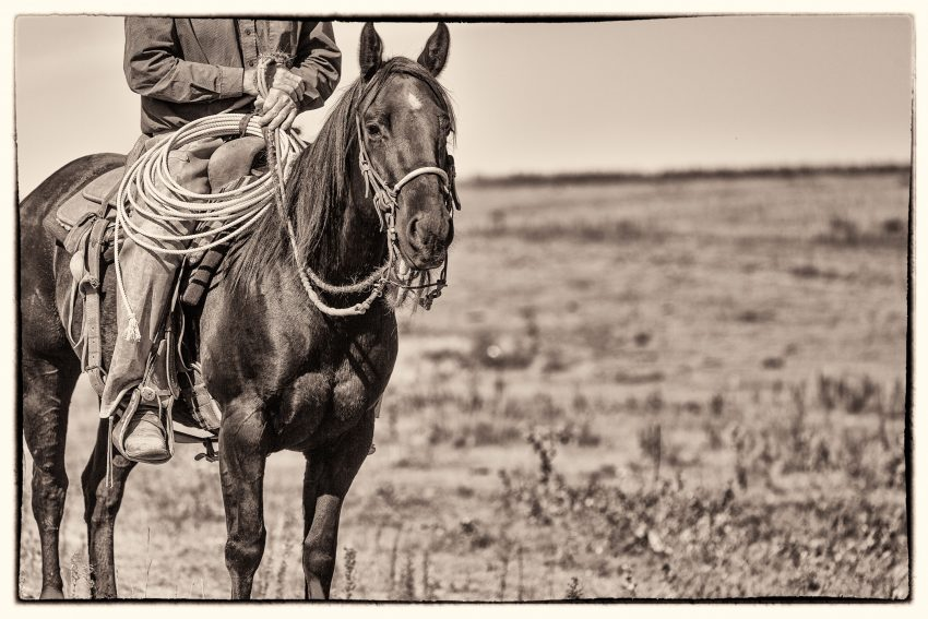 western wednesday, south dakota cowgirl photography