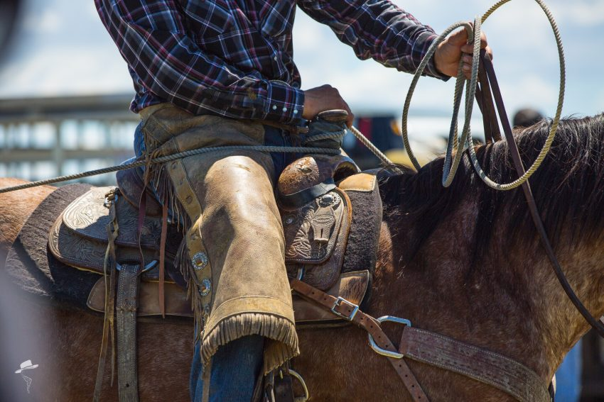national day of the horse, hackamore horse, horses that make dreams come true, cowboys, buckaroos, south dakota cowgirl photography