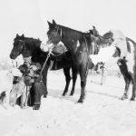 Predator Hunting History; Coyotes