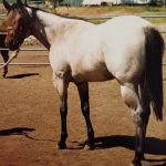 Race Horse to Ranch Horse: Part 1