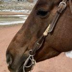 Kohr Quarter Horses' Favorite Bits