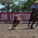 Rodeo Season