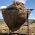Feeding with Hay Nets