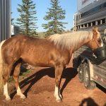 Horse Deworming Protocol