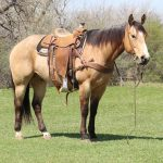 Featured Horse: 6 yr old Gelding