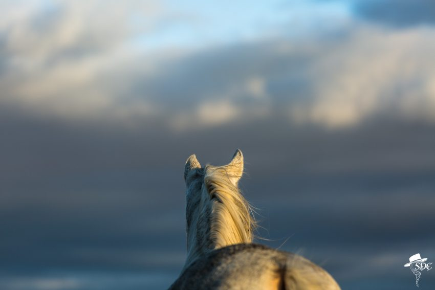 national day of the horse, south dakota cowgirl photography