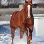 Stallion Auctions