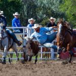 Baby the WNFR Steer Wrestling Horse
