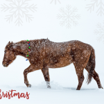Merry Christmas From the Cavvy Savvy Team