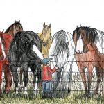 Bucking Horse Attraction